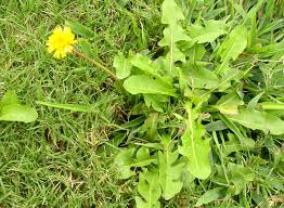 Wild Weeds Poetry Contest